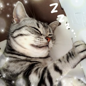 ネコトンネルで熟睡中のさくらたん。