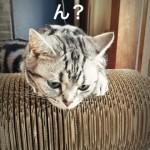 アゴ乗せも楽しめる「ひだまり猫の爪とぎ」
