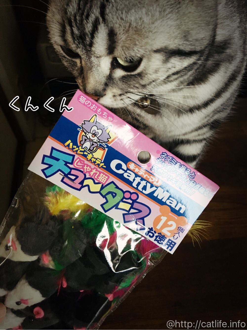 チューダースを猫チェック