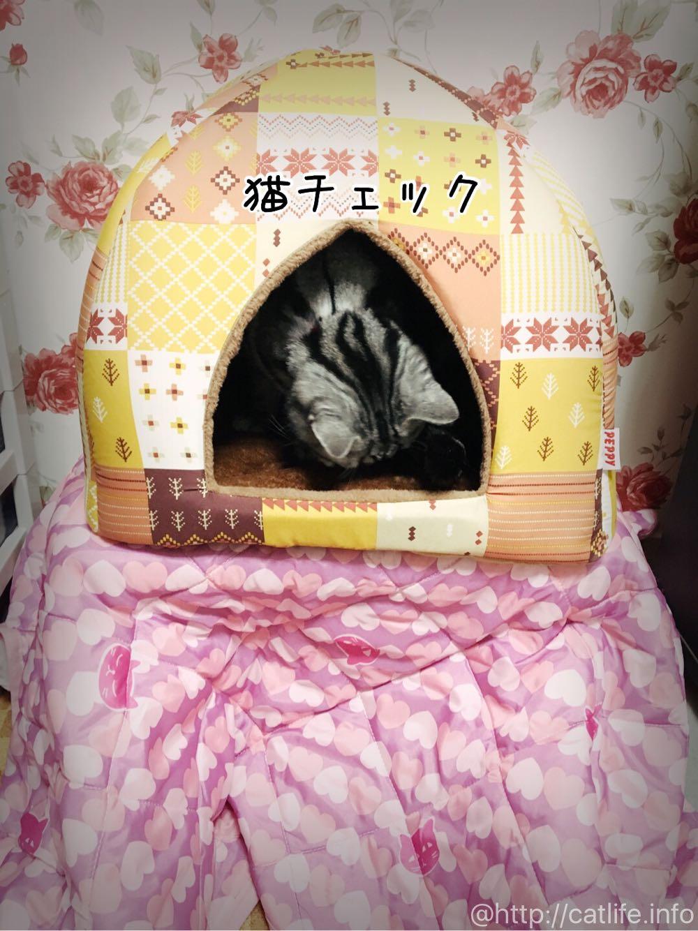 ペット用こたつの上に蓄熱キリムドームベッド