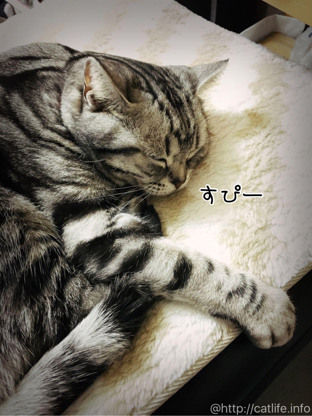 いきなり寝ました。