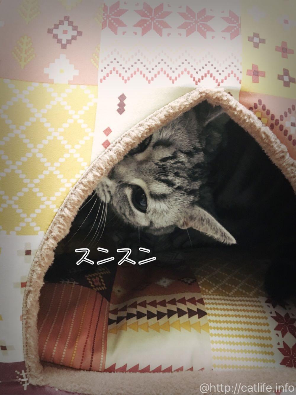 ペピイ「ドームベッド」をスンスン