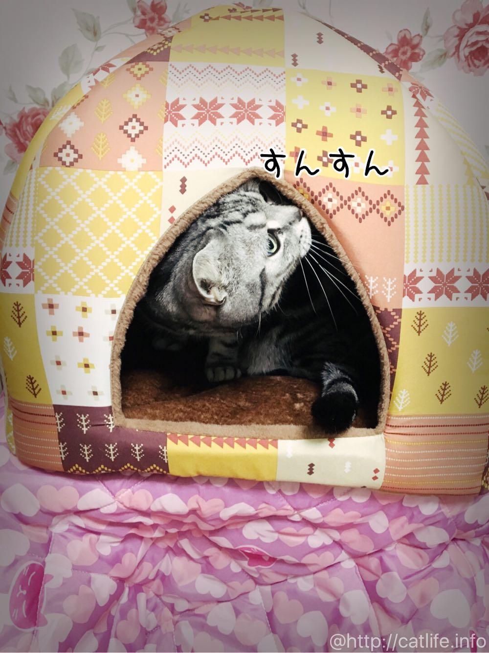 蓄熱キリムドームベッドを猫チェック