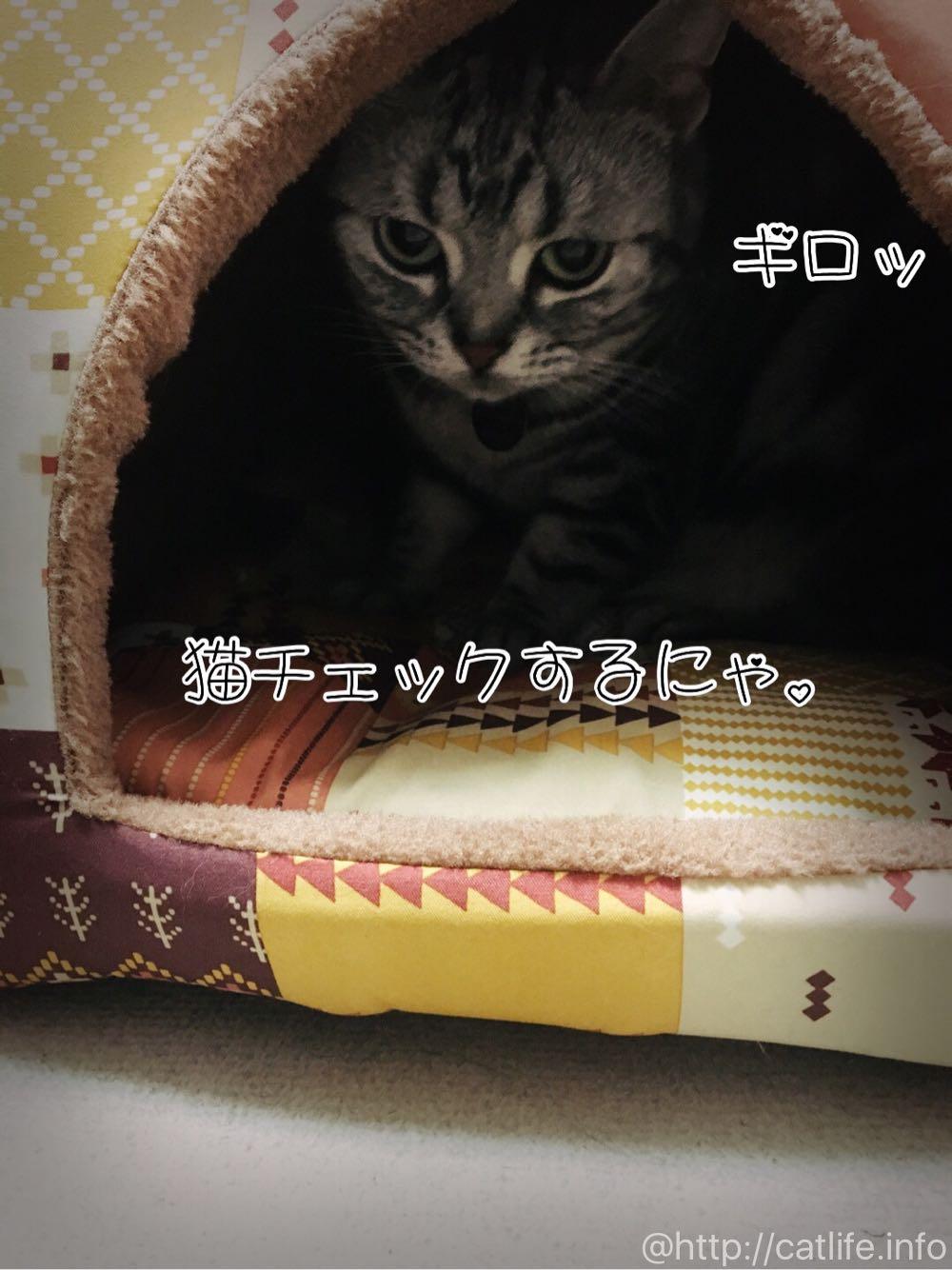 ペピイ「ドームベッド」を猫チェックするにゃ。